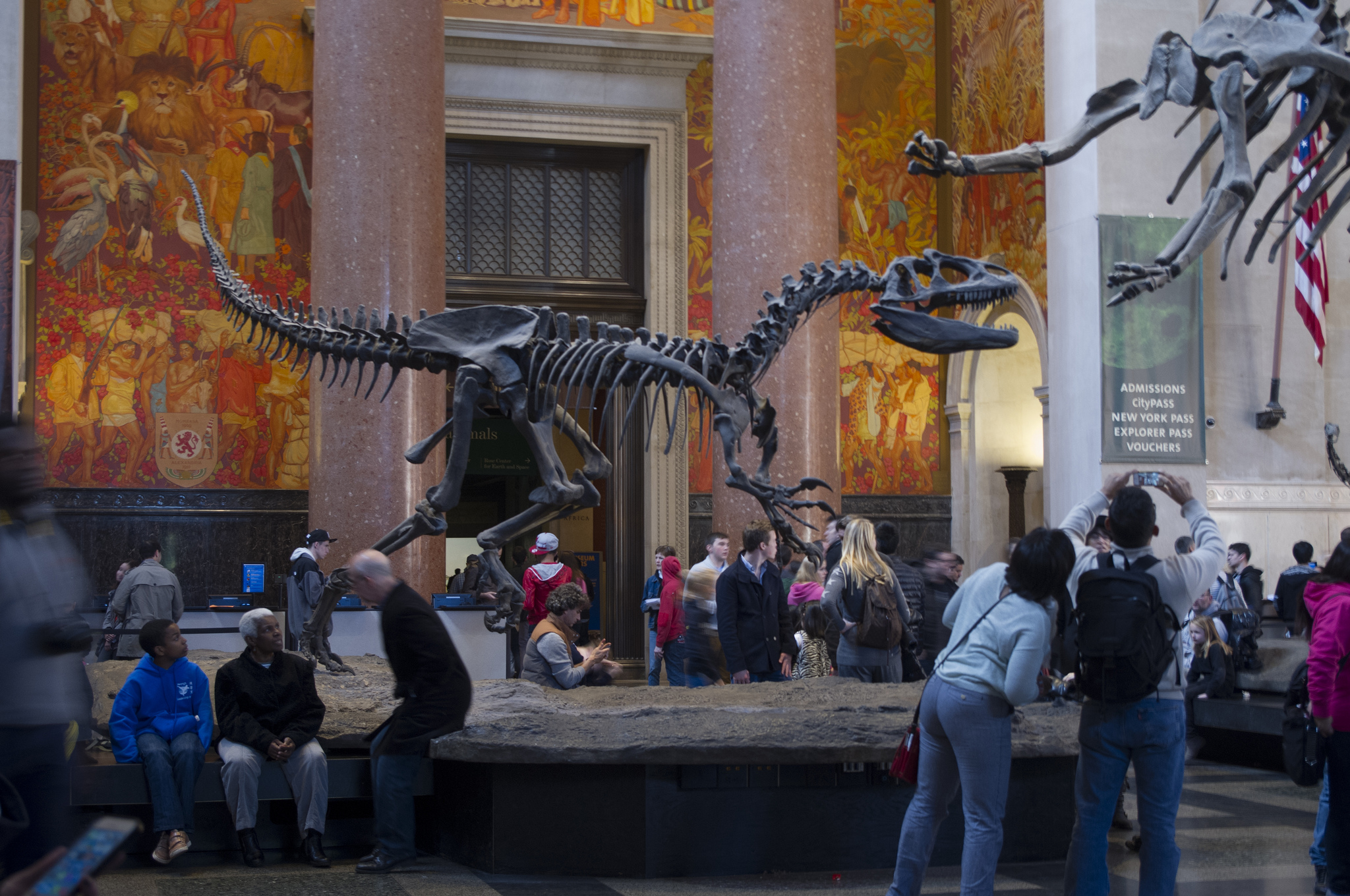 American Museum of Natural History in New York.