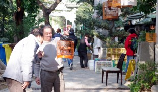 Men at the Bird Garden on Yuen Po Street, Hong Kong. Photo by alphacityguides.