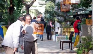 Men at the Bird Garden on Yuen Po Street, Hong Kong. Photo by alphacityguides.