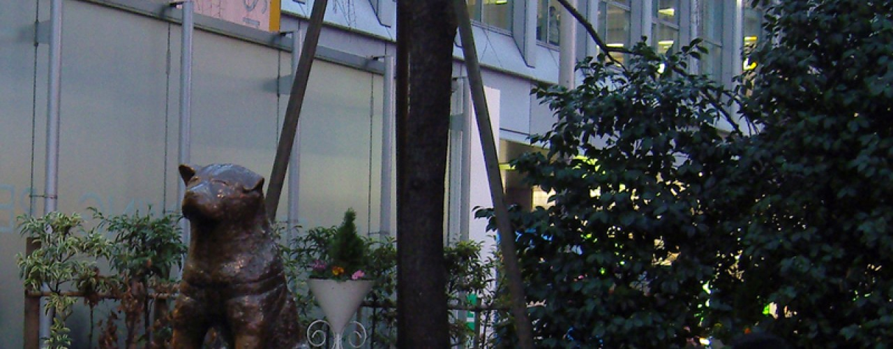 Hachikō the Akita dog statue in Tokyo. Photo by alphacityguides.
