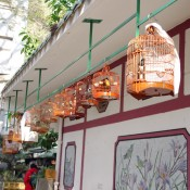 Caged songbirds at the Bird Garden on Yuen Po Street in Hong Kong. Photo by alphacityguides.