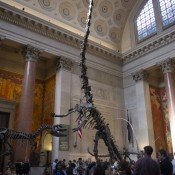 Dinosaur skeletons at American Museum Natural History. Photo by alphacityguides.