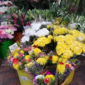 Flowers at the Flower Market in Hong Kong. Photo by alphacityguides.