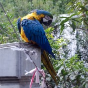 Parrot at the Bird Garden on Yuen Po Street in Hong Kong. Photo by alphacityguides.